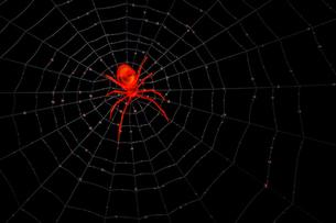 赤い透明な蜘蛛の写真素材 [FYI00166368]