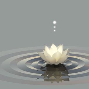 蓮と水面と光の写真素材 [FYI00166372]