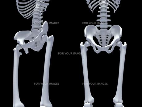 股関節の写真素材 [FYI00166481]