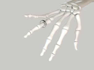 マリッジリングと骨の写真素材 [FYI00166514]
