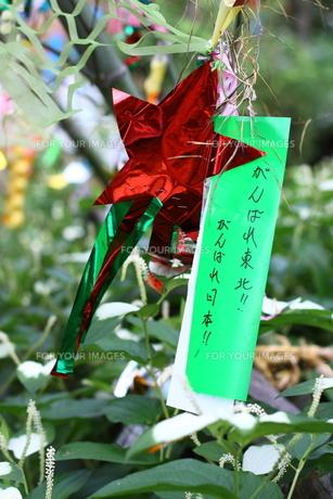 七夕メッセージの写真素材 [FYI00166636]