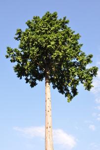 木立ちの風景の写真素材 [FYI00167868]