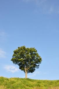 木立ちの風景の写真素材 [FYI00167877]