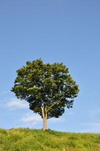 木立ちの風景の写真素材 [FYI00167888]