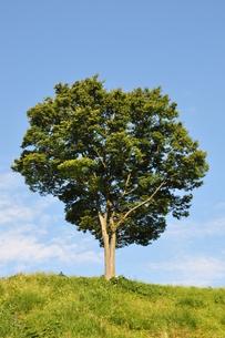 木立ちの風景の写真素材 [FYI00167889]