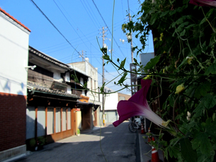 朝顔の咲く町並み風景の写真素材 [FYI00168100]