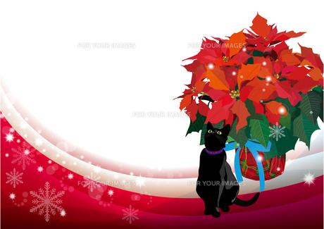 ポインセチアと黒猫のクリスマスイメージの写真素材 [FYI00168156]