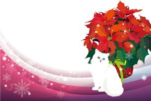 ポインセチアと白猫のクリスマスイメージの写真素材 [FYI00168167]