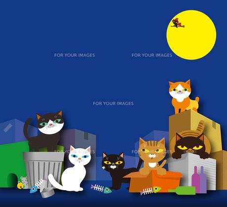 猫の集会所の写真素材 [FYI00168171]
