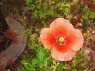 flowerの写真素材 [FYI00168252]