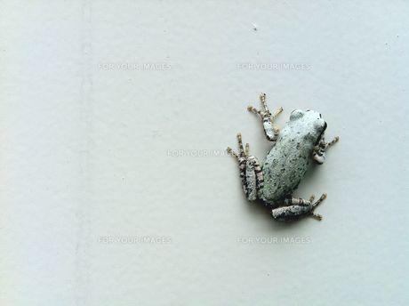 frogの素材 [FYI00168260]