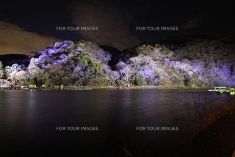 嵐山 ライトアップの写真素材 [FYI00168285]