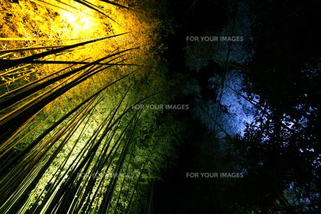 竹林 ライトアップの写真素材 [FYI00168299]