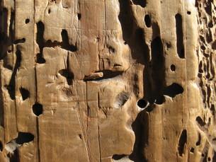 虫食い 素材 木の写真素材 [FYI00168326]