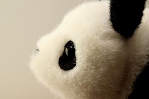 パンダの写真素材 [FYI00168379]