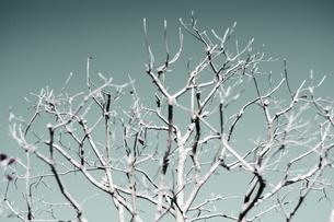 枯れ木の写真素材 [FYI00168431]