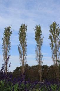 4本の木の素材 [FYI00168500]