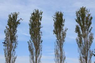 並んだ木の素材 [FYI00168501]