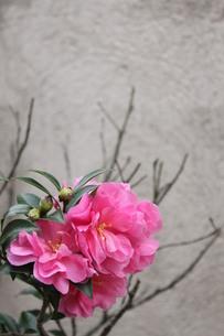 ピンクの花の素材 [FYI00168509]