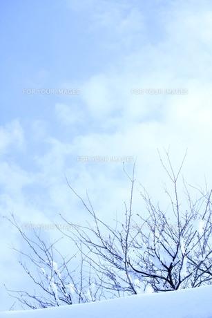 冬の空の素材 [FYI00168516]