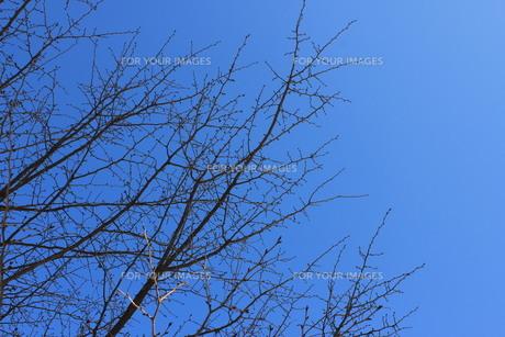 冬空と木の枝の素材 [FYI00168537]