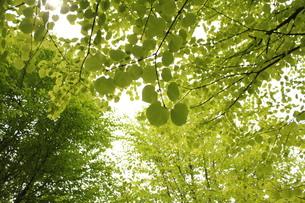 黄緑色の空の素材 [FYI00168538]