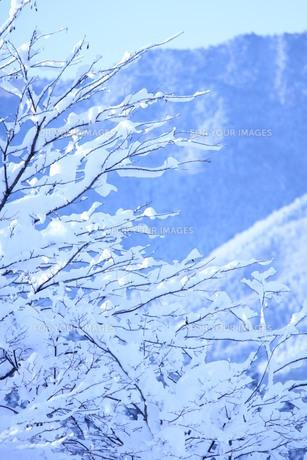 雪の枝の素材 [FYI00168539]