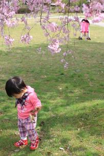 枝垂桜の下で散歩の素材 [FYI00168549]