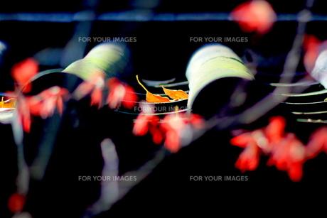 冬春譜の写真素材 [FYI00168568]