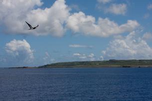 カツオドリと硫黄島の写真素材 [FYI00168579]