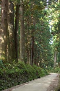 日光杉並木の写真素材 [FYI00168696]