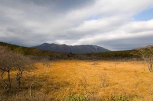 晩秋の沼ッ原湿原の写真素材 [FYI00168704]