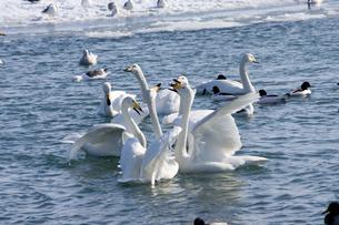 冬の風蓮湖の素材 [FYI00168806]
