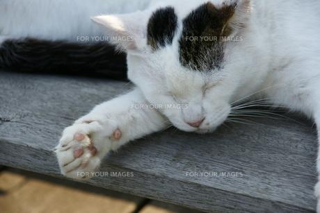 お昼寝するネコの写真素材 [FYI00168933]