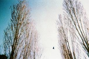 並木の写真素材 [FYI00169001]