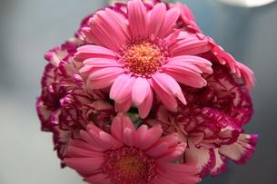 flowerの写真素材 [FYI00169006]