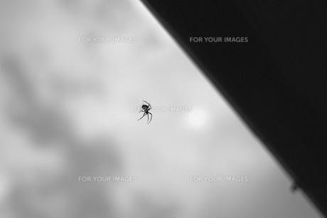 蜘蛛の写真素材 [FYI00169026]