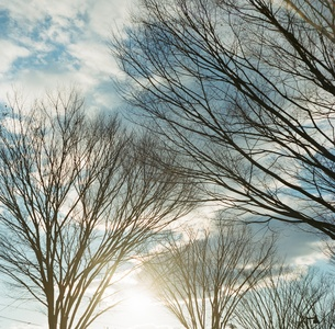 空と樹々の写真素材 [FYI00169034]