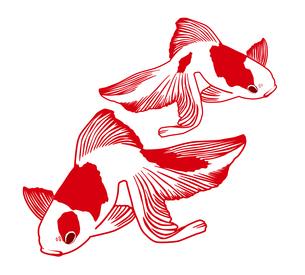 金魚の写真素材 [FYI00169110]