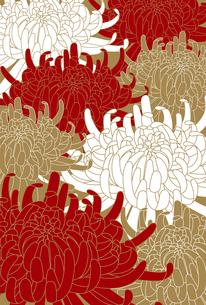 菊の花の素材 [FYI00169130]