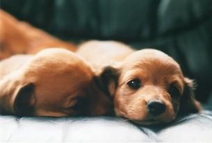 仔犬の写真素材 [FYI00169223]