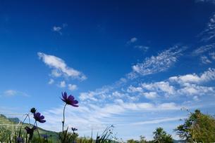 嗚呼、秋風になびく雲よ!の写真素材 [FYI00169370]