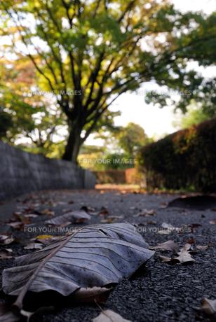 大葉の落日の写真素材 [FYI00169384]