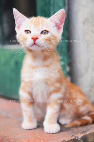 トスカーナの子猫の素材 [FYI00169409]