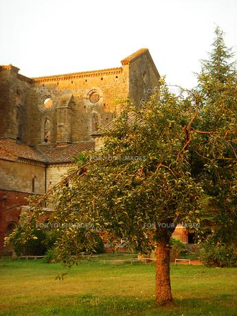 イタリアのサン・ガルガーノ修道院の素材 [FYI00169423]