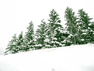 北イタリア雪景色の写真素材 [FYI00169459]
