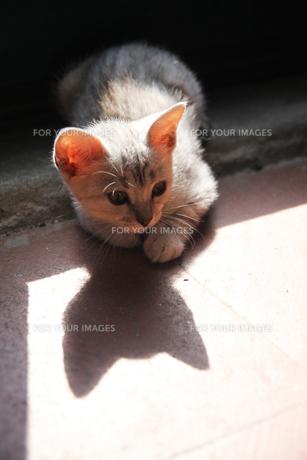 トスカーナの子猫(日だまり)の素材 [FYI00169471]