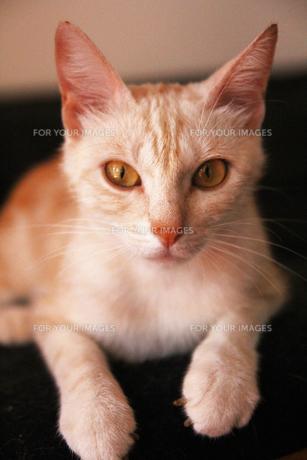 母ネコのルッチーの素材 [FYI00169475]