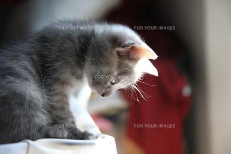 トスカーナの子猫(日だまり)の素材 [FYI00169503]