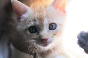トスカーナの子猫(茶トラ)の素材 [FYI00169504]